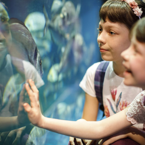 kids looking at fish in aquarium